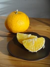 Delicious Summer Orange