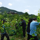 We all worked hard for pruning and training of the vines.